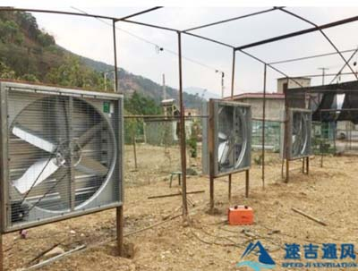 宿迁花卉大棚专用镀锌板风机通风降温工程案例